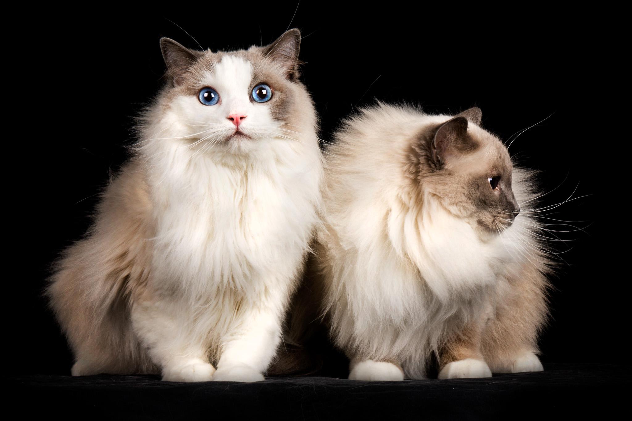 bild på två katter